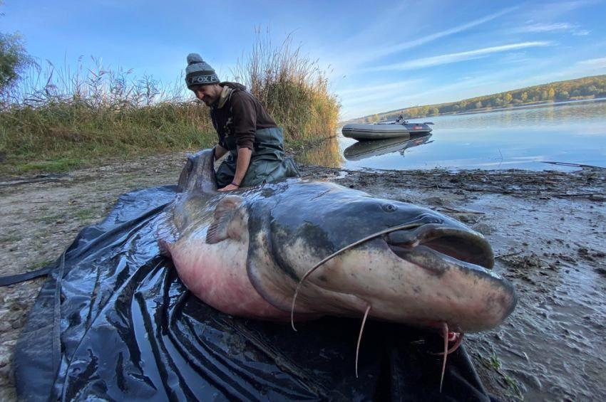 Bojlival fogtak 90 kilós harcsát a Palotási-víztározón