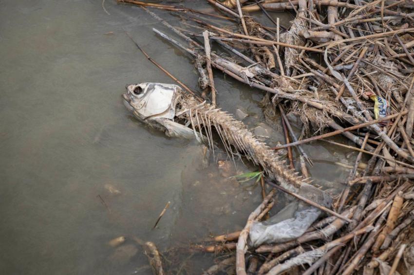 Összesítették: 110 mázsa hal pusztult el a nyáron a Velencei-tóban