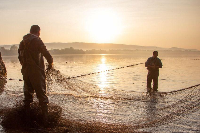 Vízhiány miatt kényszerlehalászásokat végeznek a dunántúli haltermelők