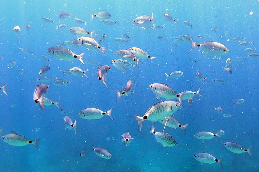 Halak etetése a tengerben – látványos víz alatti felvételek