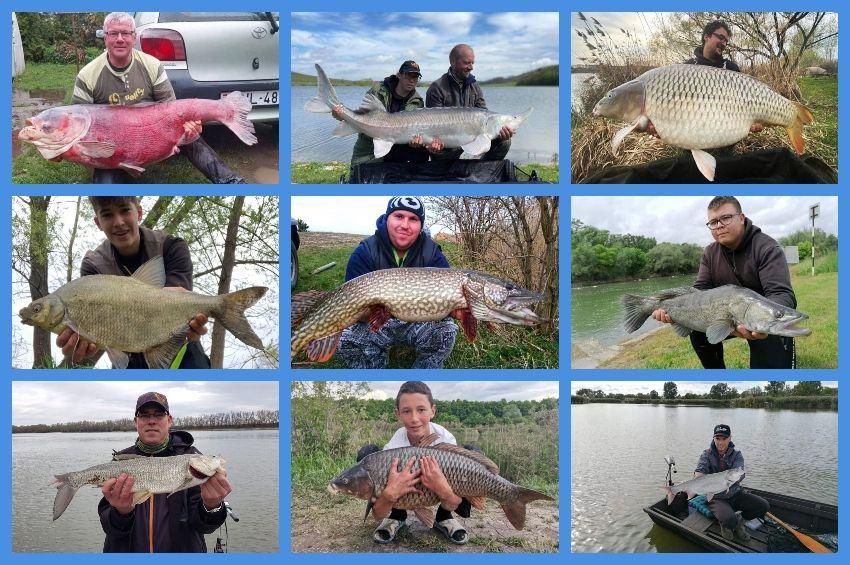 Rövid idő alatt újabb 32 ezer horgászt regisztráltak
