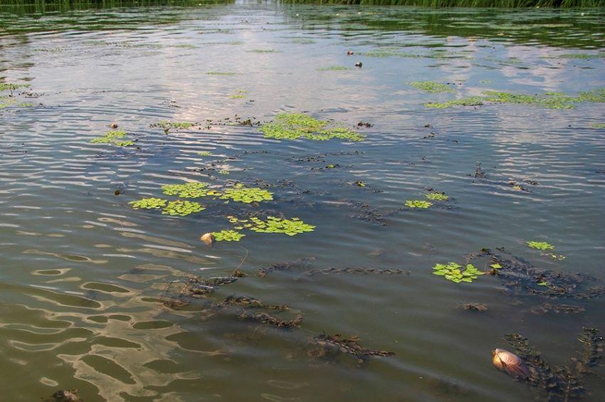 A kagylópusztulást kihasználva fogtak 41 kilós harcsát a Tisza-tóból