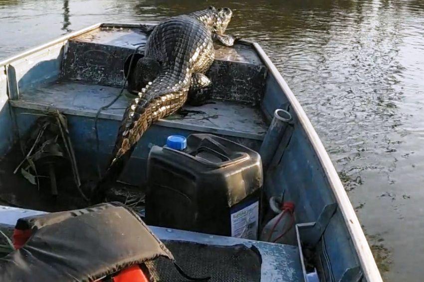 Arra ébredt egy horgász, hogy kajmán ül a csónakjában