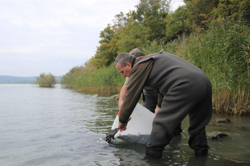 Ritka halakat telepítettek három vadvízen is