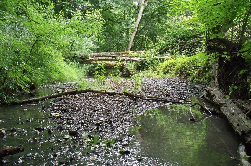 A lakosság segítségét kérik a patakok kiszáradását vizsgáló kutatáshoz