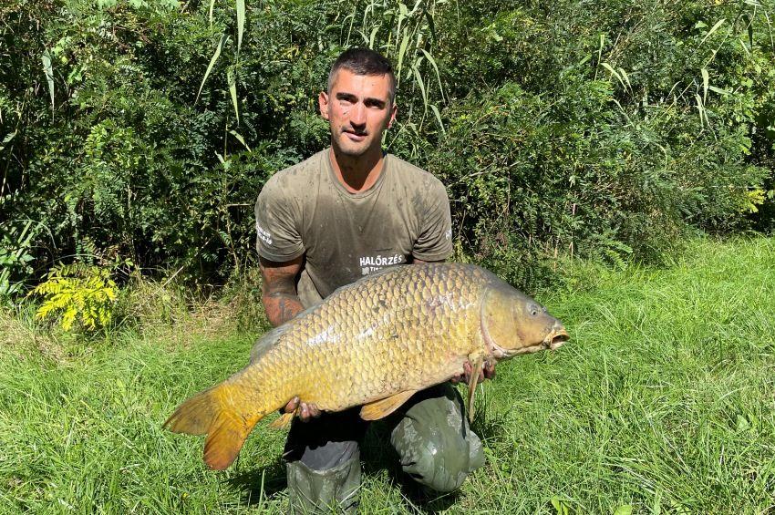 Többszáz halat, köztük óriási pontyokat mentettek ártérből a Tisza-tavi halőrök