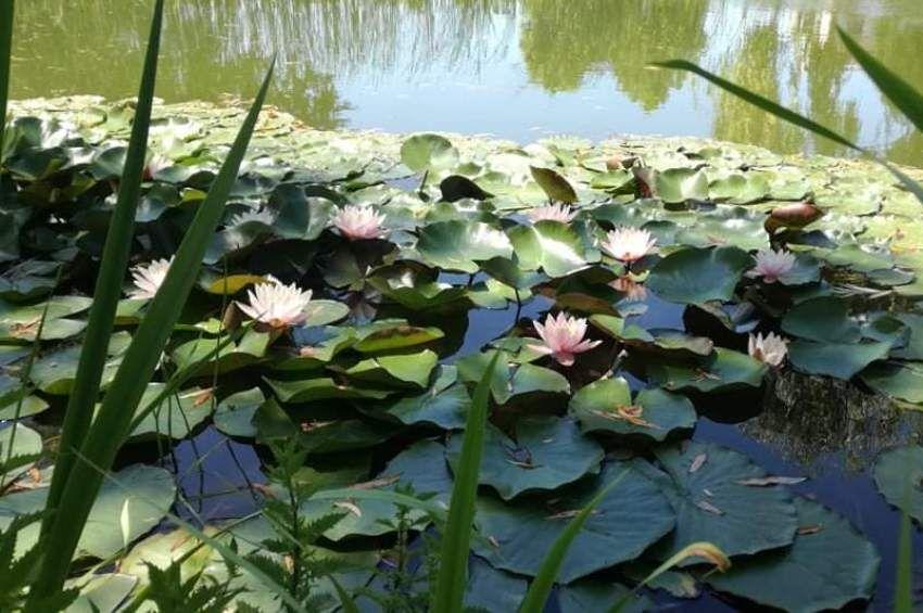 Nagyszabású kutatás veszi görcső alá a kerti tavakat idehaza