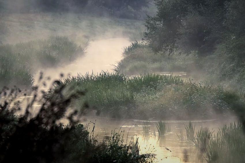 Horgászszemmel forgatott természetfilm jelent meg a Sió-csatornáról