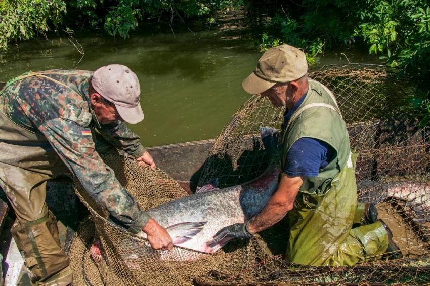 Busadömping a Tisza-tavon: rekordhónapot zártak a halászok