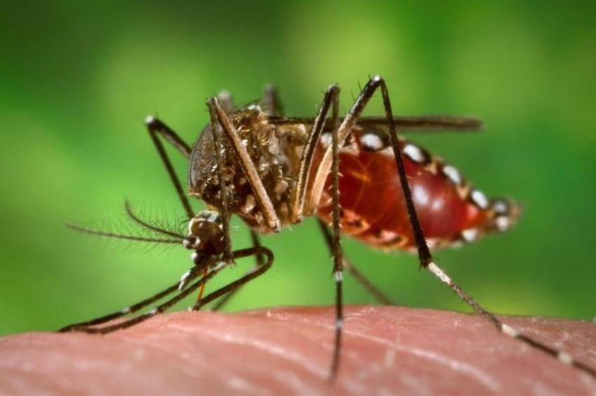 A dunai árhullám alakítja a szúnyogok elleni védekezést