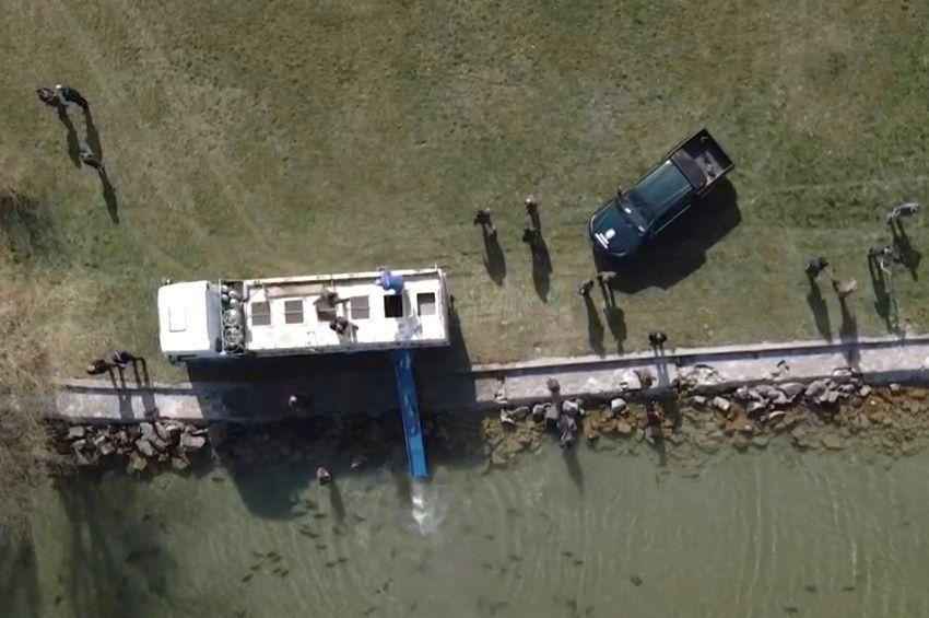 Invazív halak telepítését akadályozta meg a Nébih