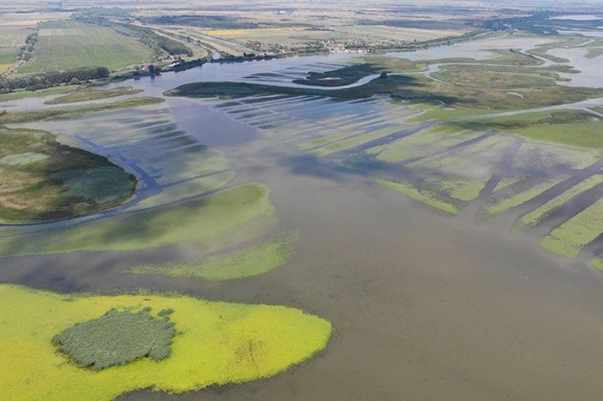 Már nem viszik a kaszák a sulymot a Tisza-tónál