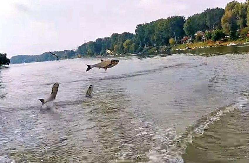 Levegőbe ugráló busacsapat követte a tiszai kenusokat