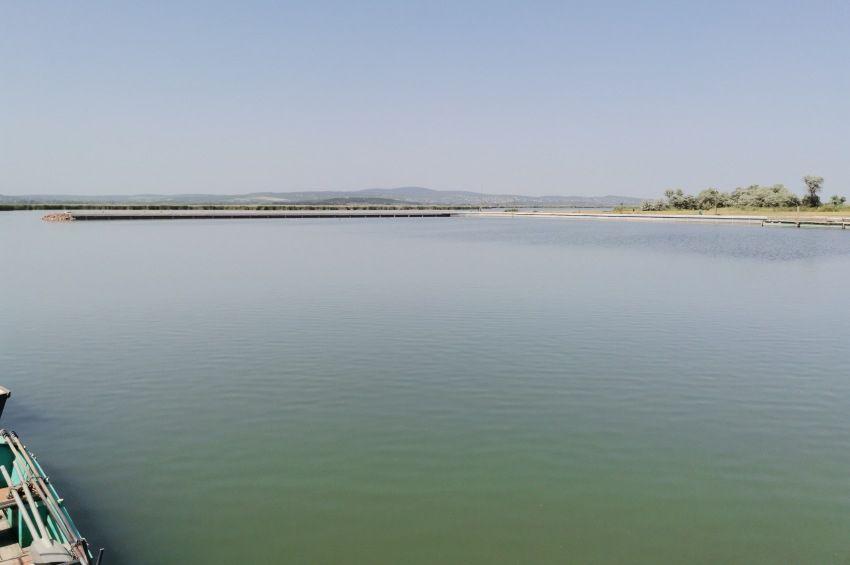 A halpusztulás utáni első telepítésre készülnek a Velencei-tónál
